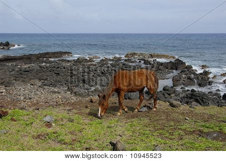 Horses Of Easter Island