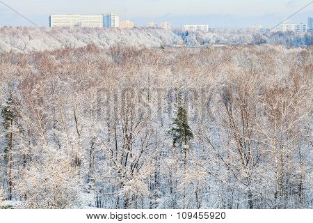 Snow Forest And Urban Houses In Winter