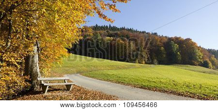 Colorful Edge Of The Wood With Resting Bench, Winding Walkway Tegernsee Area