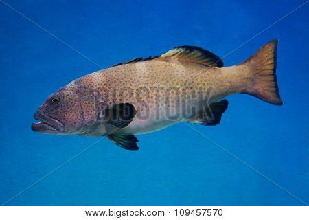 Big sea patterned fish on a blue deep ocean. Tinted old paper background. soft focus.