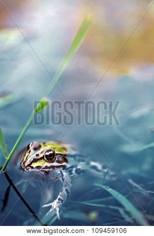 frog in a swamp