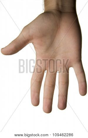 human palm against white background