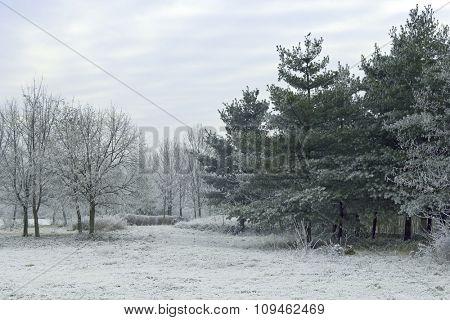 winter scene - frozen landscape