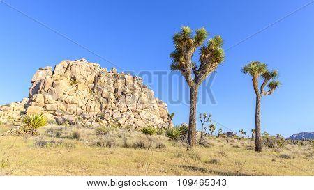 Beautiful Landscape In Joshua Tree National Park, Usa.