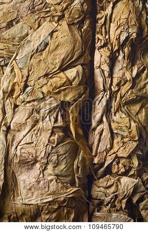 closeup of pressed tobacco leaves