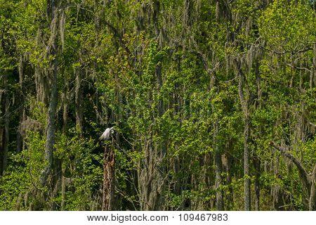 Swamp Sentinel
