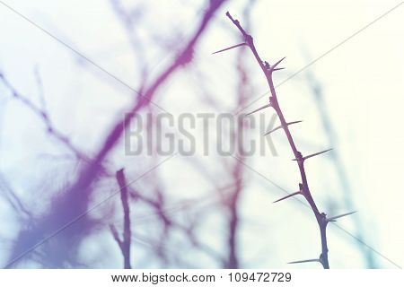 Thorn Branch Closeup In Winter Sky