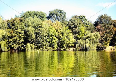 Green trees by the lake on a sunny day