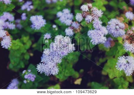 Bush with blue flowers background, close up