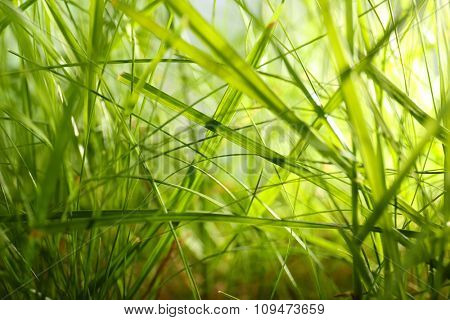 Green grass closeup