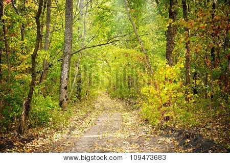 A road in a green forest