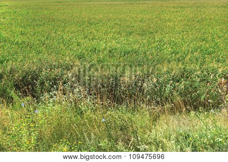 Beautiful field background