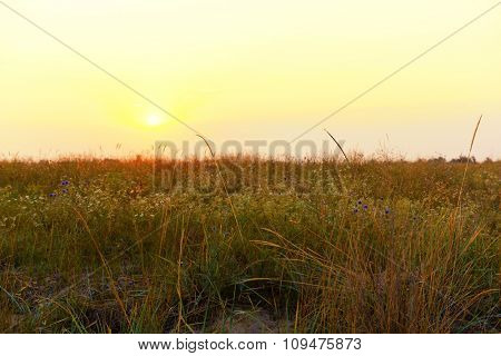 Field grass on white sky blurred background