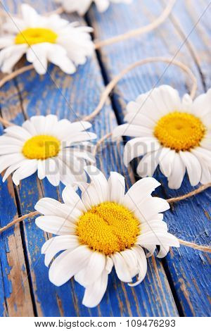 Fresh chamomile flowers on wooden table, closeup