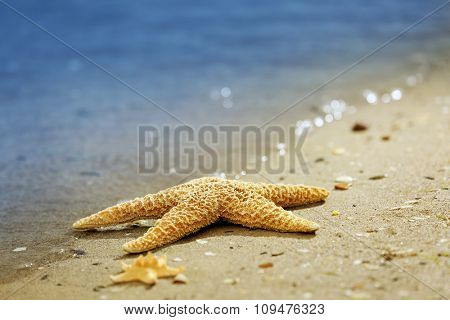 Beautiful starfish on sandy beach