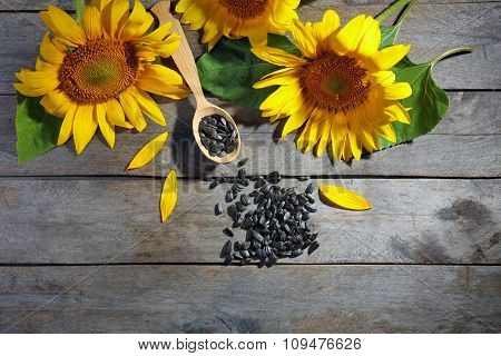 Beautiful bright sunflowers with seeds on wooden table close up