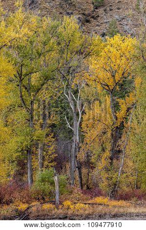 Barren tree between yellow leaved trees.