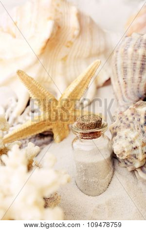 Beautiful seashells on sand background
