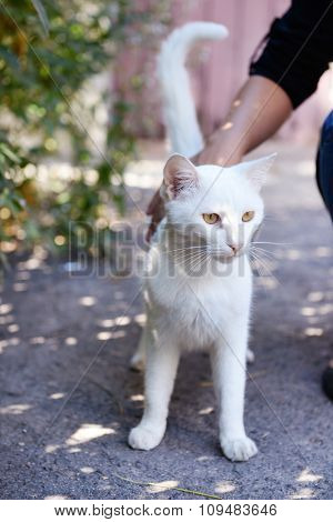 White cat playing outdoors