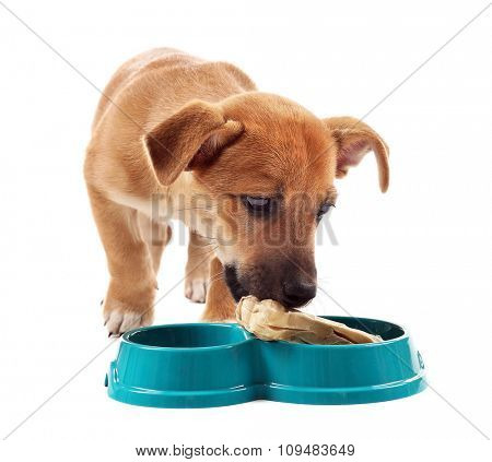 Funny puppy eating from bowl isolated on white