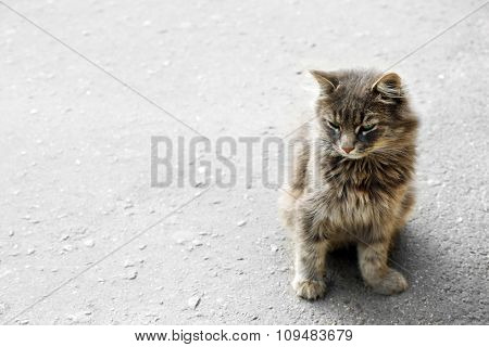 grey cat on the street