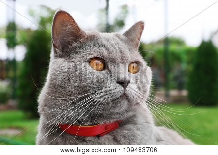 Cute cat sitting on green grass, close up