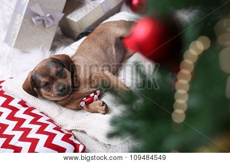Cute puppy on carpet on Christmas background