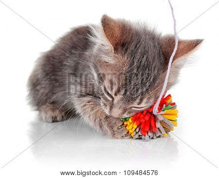 Cute little grey kitten playing with ball, isolated on white