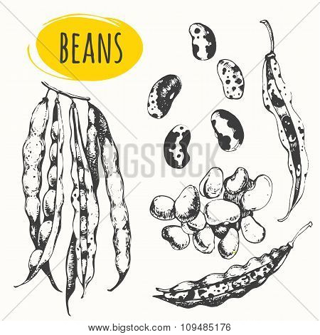 Beans and legumes. Set of hand drawn food.