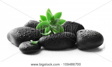 Stack of wet stones and a green flower, isolated on white. Spa relaxation concept