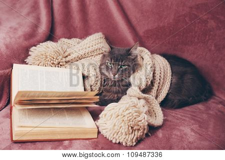 Grey lazy cat with knitted scarf and book on sofa in the room, close up
