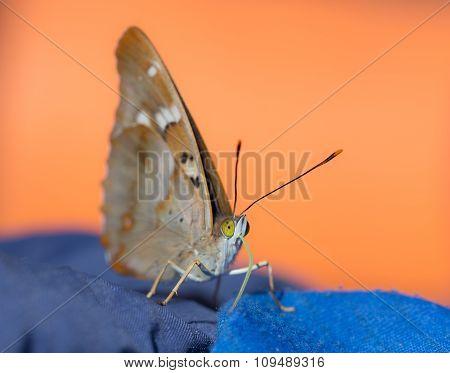 Portrait Of Butterfly