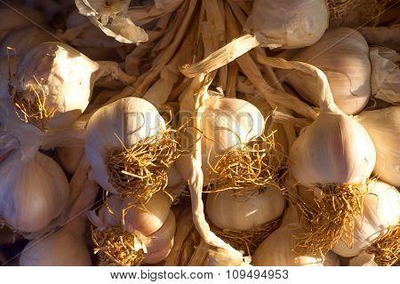 Background of the bundles of organic garlic on market in Turkey