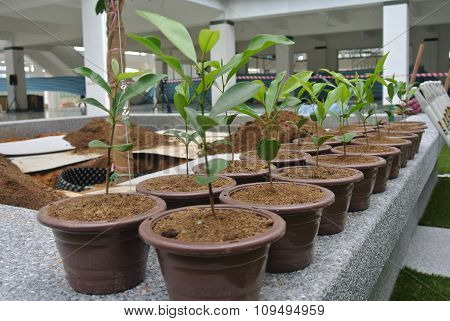Row of small plant planted in the polymer pots