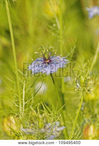 Blue flower in a meadow.