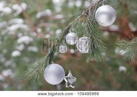 Evergreen pine lush branches with Christmas ornaments of baubles and star