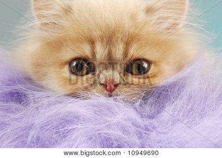 Surprised Kitten