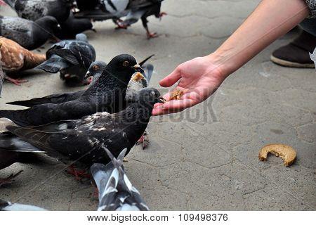 Girl feeding pigeons in square