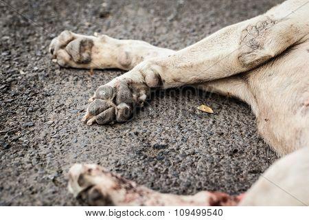 Dead Stray Dog