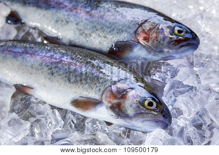whole raw fresh fish trout on ice