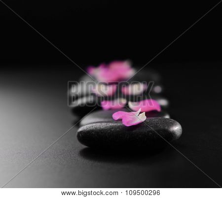 Pebbles with flower petals on black background