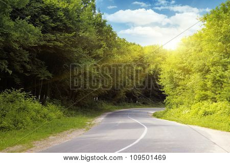 Empty asphalt road running through forest.