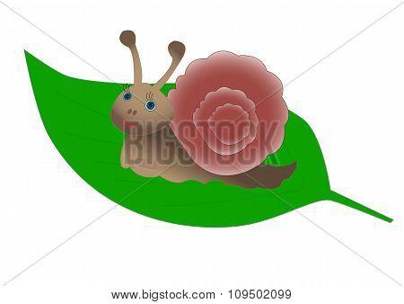 Cute snail on a green leaf