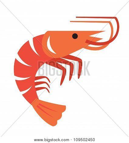 vector color prawn