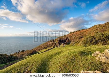Rame Head In Cornwall