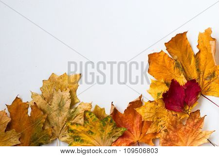 Autumn Yellow Dry Leaf On A White Background