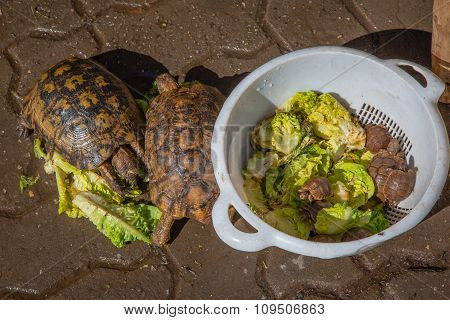 Turtles In Marrakesh