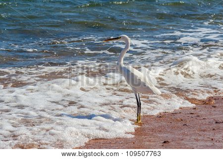 Heron On The Shore Of The Sea