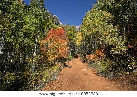 Rocky Mountain Fall