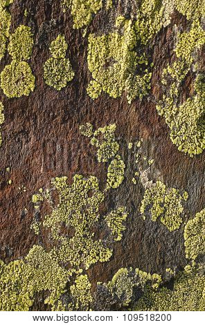 Green Lichen Formation Over A Textured Brown Stone